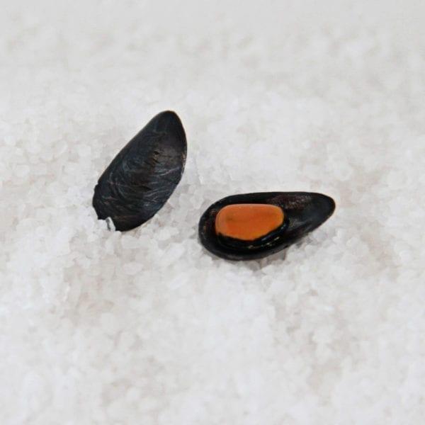 Silver earrings Mussel